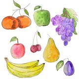 Watercolor set of fruits. Bright types healthy food. Vegetarian food stock illustration
