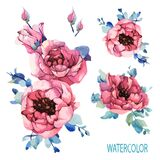 Watercolor set garden roses, pink peony, navy blue leaves, spring, summer elements. Floral, flowers decorations greeting,