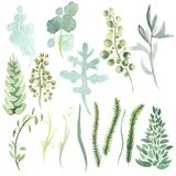 Watercolor gentle greenery of plants. Watercolor set gentle greenery of plants. Sprigs of greenery with buds and leaves Royalty Free Stock Photos