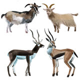 Watercolor set of goats Royalty Free Stock Image