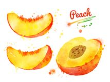 Watercolor set of half and sliced peach. Hand drawn watercolor illustration set of half and sliced peach Stock Photography