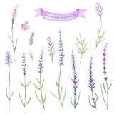 Watercolor set of lavender elements Stock Photos