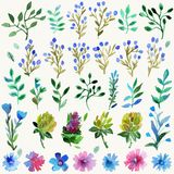 Watercolor  set with leaves and flowers. Hand drawn plant. Stock Photography