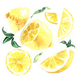 Watercolor set of lemons. Lemon segments, juicy lemon. Vector il Stock Photos