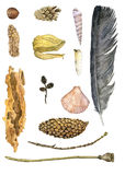 Watercolor set of nature objects. Wing of dragonfly and shell,twig and piece of pine bark, feather and cones at white background, hand drawn illustration vector illustration
