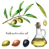 Watercolor set with olive. Hand painted illustration with olive berries, bottle with olive oil and tree branches with Stock Images