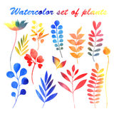 Watercolor set of plants Royalty Free Stock Photo