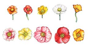 Watercolor set of poppies royalty free illustration