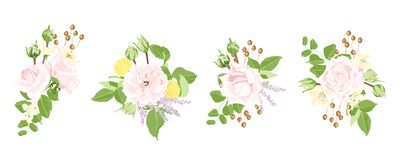 Watercolor Set of Roses and Floral Elements. stock illustration