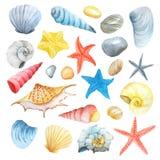 Watercolor set of seashells, stars and stones Royalty Free Stock Photos