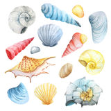 Watercolor set of seashells and stones Royalty Free Stock Photography
