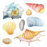Watercolor set of seashells and stones Royalty Free Stock Images