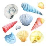 Watercolor set of seashells and stones Royalty Free Stock Photo
