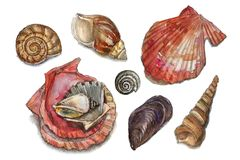 Watercolor set of seashells Royalty Free Stock Photos