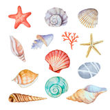 Watercolor set of seashells Royalty Free Stock Photo