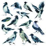 Watercolor set of sketches of birds. royalty free stock photo