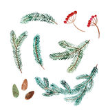 Watercolor set of spruce branch, cone and red berry. Watercolor illustration. Set of green spruce branch, cone and red berry Stock Photos