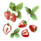 Watercolor set strawberry drawing. Strawberry on a white backgro Stock Photo
