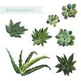 Watercolor set succulent plants. Stock Photos