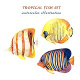 Watercolor set of tropical fish - angelfish, copperband butterflyfish and bluecheek butterflyfish. stock illustration