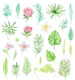 Watercolor set of tropical flowers vector illustration