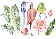 Watercolor set with tropical leaves, flowers and birds. Illustra Stock Photo
