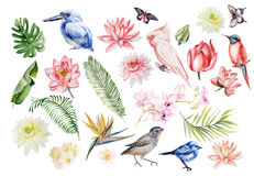 Watercolor set with tropical leaves, flowers and birds. Illustra Royalty Free Stock Images