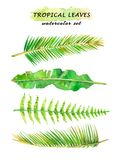 Watercolor set of tropical leaves - palm tree branches, banana and fern leaves. Hand drawn illustration isolated on white background Royalty Free Stock Image