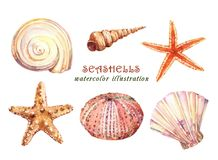 Watercolor set of underwater life objects - various tropical seashells,  starfish and sea urchin. stock illustration