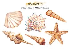Watercolor set of underwater life objects - various tropical seashells and starfish. royalty free illustration