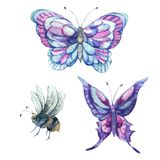 Watercolor set of vintage colorful butterflies. And bee, nature design elements collection isolated on white background Stock Images