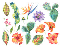 Watercolor set of vintage floral tropical natural elements. Exotic flowers, cactus, leaves botanical bright classic nature collection isolated on white Stock Images