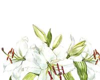 Watercolor set of white lilies, hand drawn botanical illustration of flowers isolated on a white background. Watercolor set of white lilies, hand drawn Stock Photos