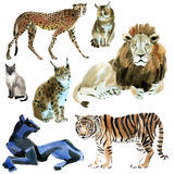 Watercolor set of wild cats Stock Photos