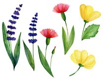 Watercolor set of wild flowers vector illustration
