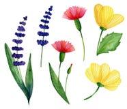 Watercolor set of wild flowers vector illustration