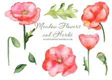 Watercolor set with wildflowers poppies, leaves, flowers. Flower botanical set on a white background. Great for cards, invitations, greeting cards, weddings royalty free illustration