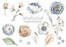 Watercolor set with winter christmas flowers, leaves, berries