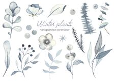 Watercolor set with winter christmas plants of blue color, leaves, flowers, branches, foliage