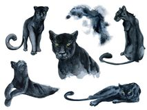 Watercolor Set With Black Panthers Animals Collection Royalty Free Stock Photography
