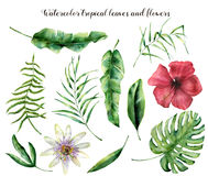 Free Watercolor Set With Tropical Leaves. Hand Painted Palm Branch, Fern And Leaf Of Magnolia. Tropic Plant Isolated On White Royalty Free Stock Image - 96353556