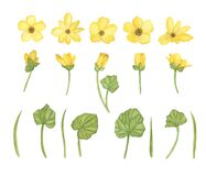 Watercolor set of yellow spring flowers with leaves