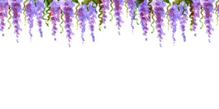 Watercolor shades frame border top dangling loach flowers lavender france romance petals lilac pink framing decoration isolated. Watercolor shades border top Royalty Free Stock Images