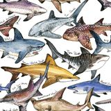 Watercolor shark seamless pattern. Underwater tropical life illustration Stock Images