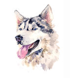 Watercolor sheepdog with wise look Stock Images