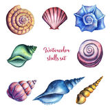 Watercolor shells set. Royalty Free Stock Photos