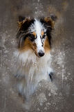 Watercolor Shetland sheepdog Stock Image