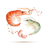 Watercolor shrimp Royalty Free Stock Photo