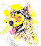 Watercolor siberian husky dog in glasses and yellow splashes Stock Image