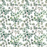 Watercolor silver dollar eucalyptus big seamless pattern. Hand painted beautiful eucalyptus branch isolated on white vector illustration